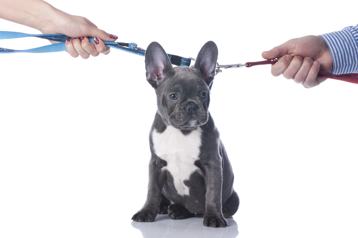 Can the Court Award Custody of a Pet in Wisconsin? | Wisconsin ...